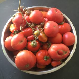 Tomatoes pretty as a painting!